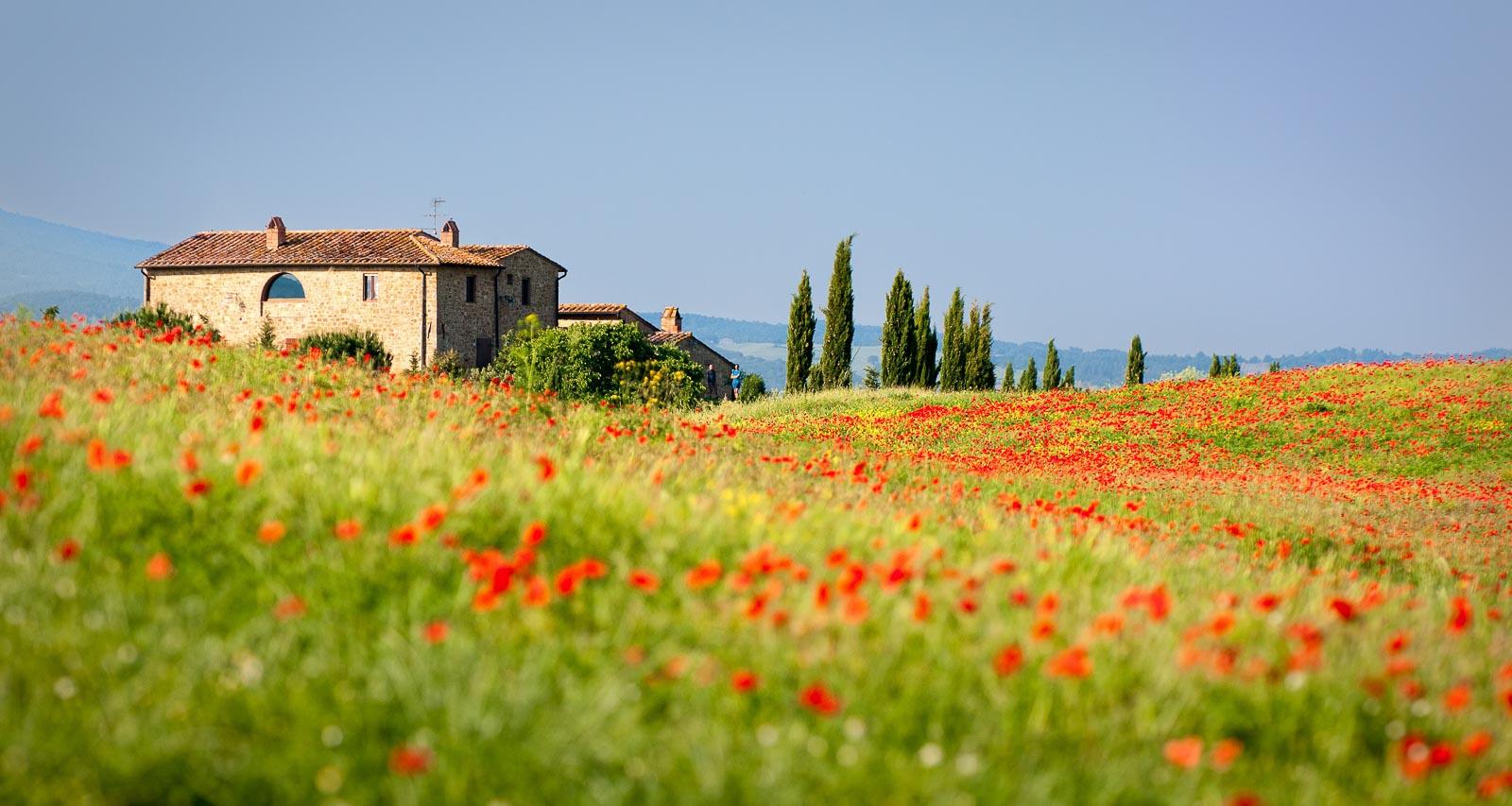 Landhaus in einer Blumenwiese